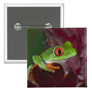 Red-eyed treefrog 2 inch square button