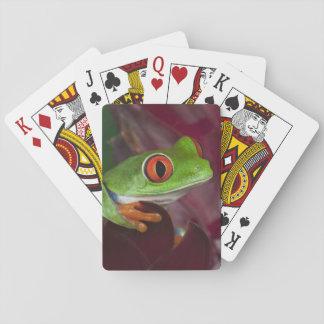 Red-eyed treefrog card decks