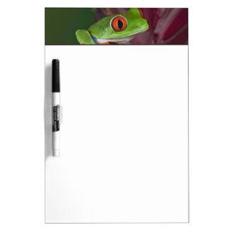 Red-eyed treefrog Dry-Erase board