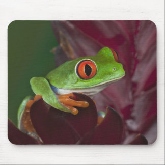 Red-eyed treefrog mouse pad