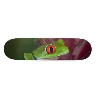 Red-eyed treefrog skateboard