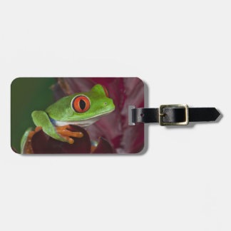 Red-eyed treefrog tags for luggage