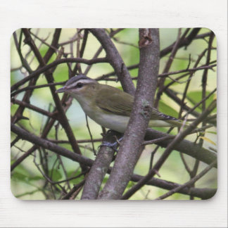 Red-eyed Vireo Mouse Pad