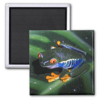 Red Eyes Frog On Leaf 2 Inch Square Magnet