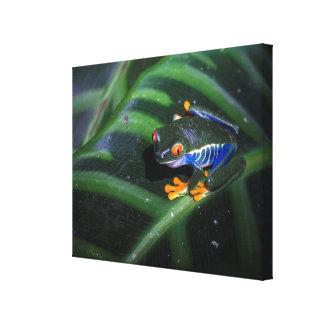 Red Eyes Frog On Leaf Canvas Print