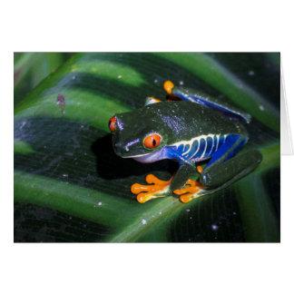 Red Eyes Frog On Leaf Card
