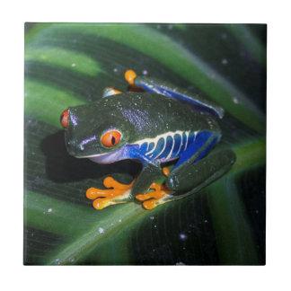 Red Eyes Frog On Leaf Ceramic Tile