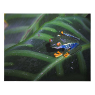 Red Eyes Frog On Leaf Panel Wall Art