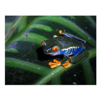 Red Eyes Frog On Leaf Postcard