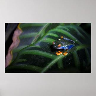 Red Eyes Frog On Leaf Poster