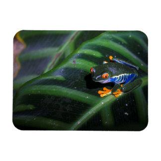 Red Eyes Frog On Leaf Rectangular Photo Magnet