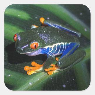 Red Eyes Frog On Leaf Square Sticker