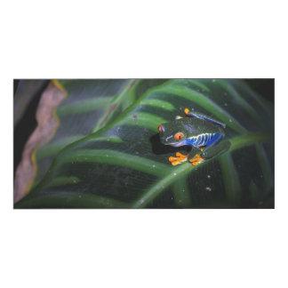 Red Eyes Frog On Leaf Wood Wall Art