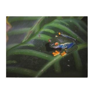 Red Eyes Frog On Leaf Wood Wall Decor