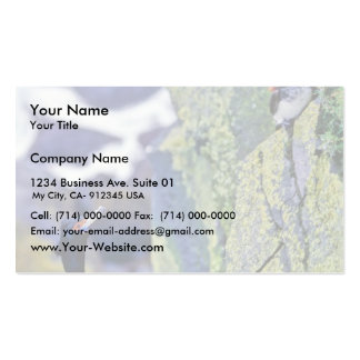 Red-faced Cormorant and Parakeet Auklet Double-Sided Standard Business Cards (Pack Of 100)