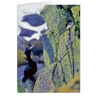 Red-faced Cormorant and Parakeet Auklet Greeting Card