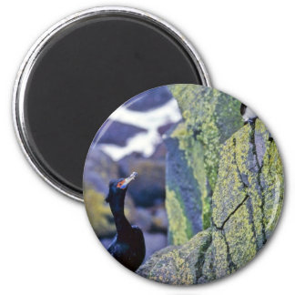 Red-faced Cormorant and Parakeet Auklet Refrigerator Magnet