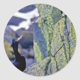 Red-faced Cormorant and Parakeet Auklet Round Stickers