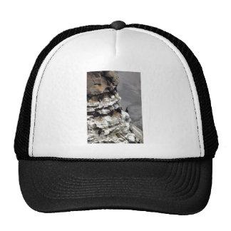 Red-faced Cormorant Colony Trucker Hats
