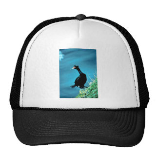 Red-faced Cormorant Mesh Hats