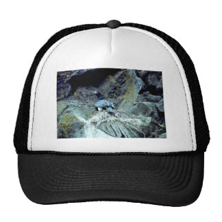 Red-faced Cormorant Hat
