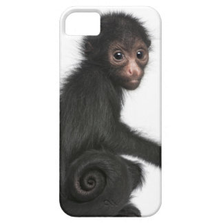 Red-faced Spider Monkey - Ateles paniscus 3 iPhone 5 Cover
