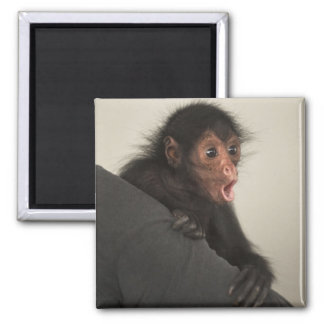 Red-faced Spider Monkey Ateles paniscus) Magnet