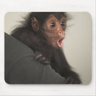 Red-faced Spider Monkey Ateles paniscus) Mouse Pad