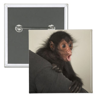 Red-faced Spider Monkey Ateles paniscus) Pinback Button