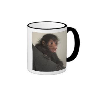 Red-faced Spider Monkey Ateles paniscus) Ringer Coffee Mug