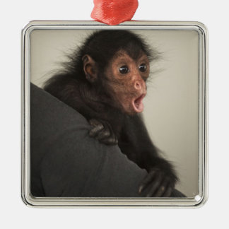 Red-faced Spider Monkey Ateles paniscus) Square Metal Christmas Ornament