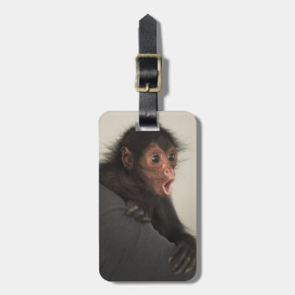 Red-faced Spider Monkey Ateles paniscus) Tags For Bags