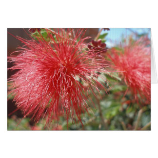 Red Fairy Duster Card