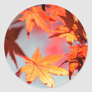 Red Fall Autumn Leaves Maple Tree Classic Round Sticker