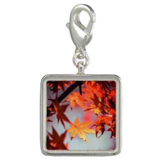 Red Fall Autumn Leaves Maple Tree Photo Charm