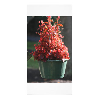 red fall flowers photo card