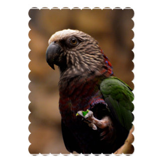 Red Fan Parrot 5x7 Paper Invitation Card