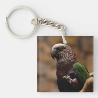 Red Fan Parrot Keychain