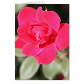 Red Favorite Floribunda Rose Card