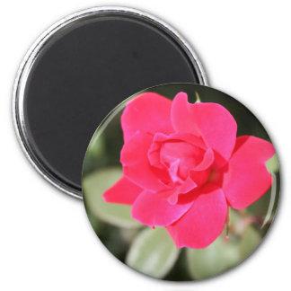 Red Favorite Floribunda Rose Refrigerator Magnet