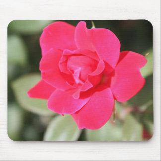 Red Favorite Floribunda Rose Mouse Pad
