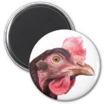 Red Feathered Chicken Egg Layer Hen Magnet