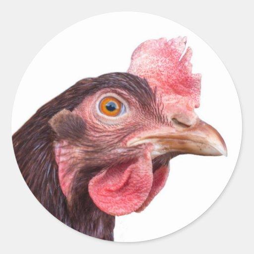 Red Feathered Chicken Egg Layer Hen Round Sticker