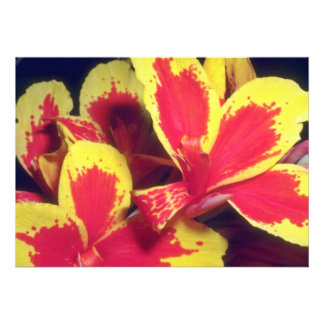 Red Fiery Glory flowers Invite