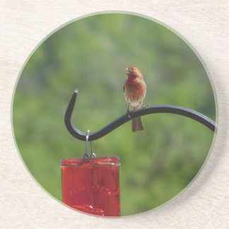 Red Finch Coaster