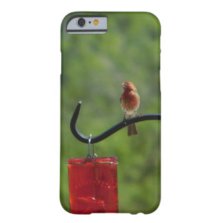 Red Finch Phone Case