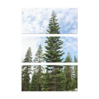 Red Fir Trees Mt Shasta Canvas Triptych Wall Art