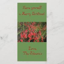 Red Firecracker Plant Christmas card