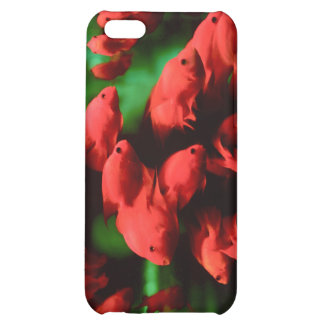 Red Fish Cover For iPhone 5C