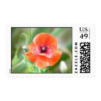 Red Flanders Poppy Stamps